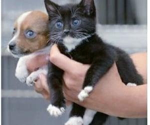 kittens, pets, and babyanimals image