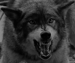 gif, proteger, and lobos image