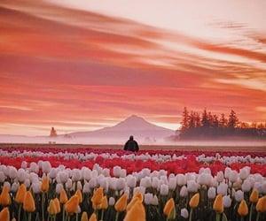 flowers, orange, and style image