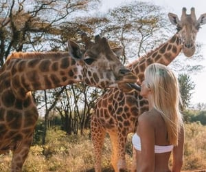 giraffe, girl, and summer image