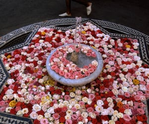 beautiful, flowers, and morocco image