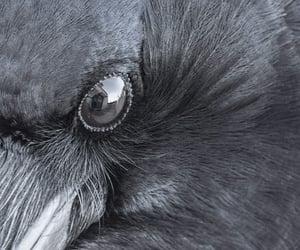 animal, eyes, and bird image