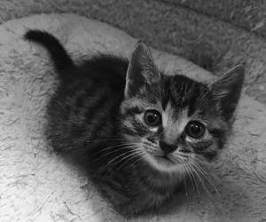 cat, bebé, and gatito image