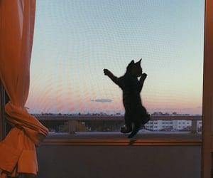 cat, gatito, and valerio image