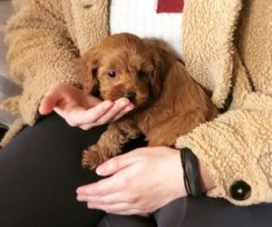 dog, doggies, and doggy image