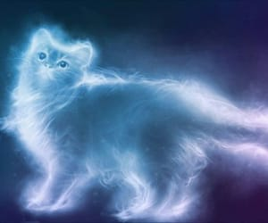 beautiful, cat, and expecto patronum image