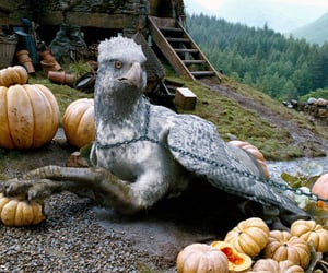 animal, beautiful, and hippogriff image