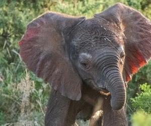 elefante, save, and naturaleza image