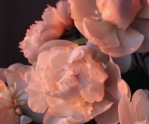 aesthetic, we heart it, and fiori image