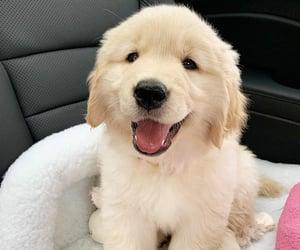 Animales, perros, and bebé image