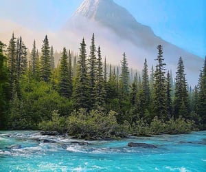 blue, forrest, and green image
