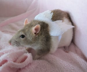 angel, inspiration, and rat image