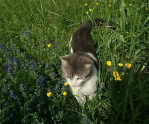 cat, garden, and kitty image