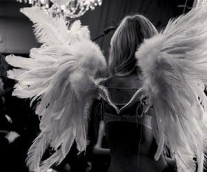 angel, like, and follow me image