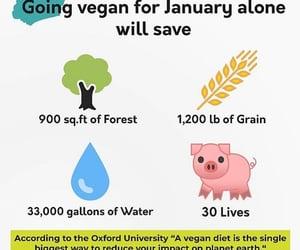 animal, save the planet, and vegan image