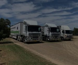 horse transport companies and horse stud work image