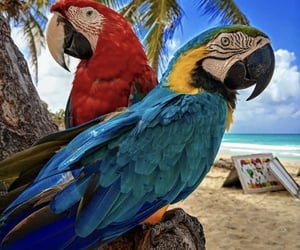 parrot, punta cana, and romeo&julieta image