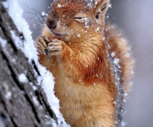 squirrel, animal, and winter image