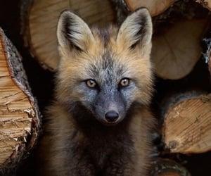 Animales, naturaleza, and fox image
