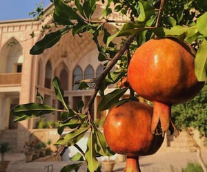 aesthetic, architecture, and fruit image