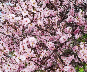 cherry blossoms, green, and verde image