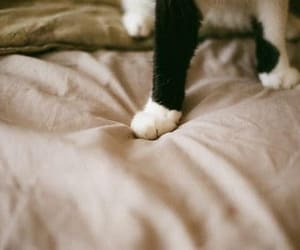 cat, photography, and bed image