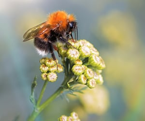 bee, beetle, and nature photography image