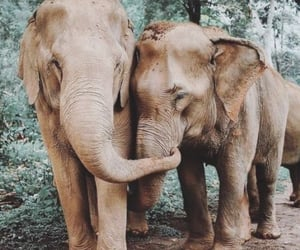 beautiful, travel, and elephants image