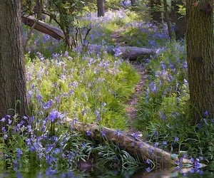 flowers, forest, and trees image