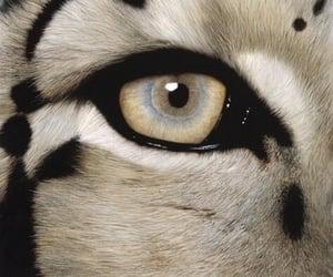 theme, animal, and rp image