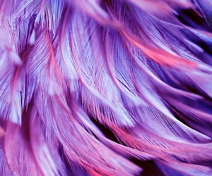 feathers, purple, and texture image