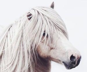 Animales, blanco, and caballo image