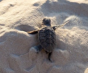 animal, turtle, and beauty image