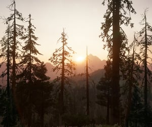 forest, morning, and mountains image