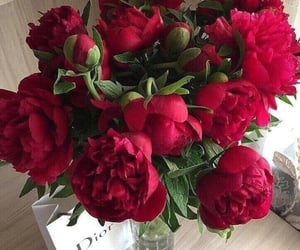 flowers, peonies, and red image