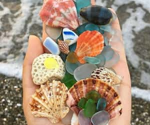 nature and shell image