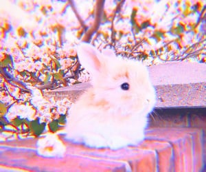 animal, bunny, and filter image