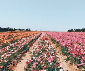 flowers, flower field, and travel image