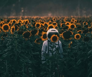 flowers, sunflower, and astronaut image