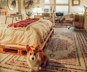 home, dog, and bedroom image
