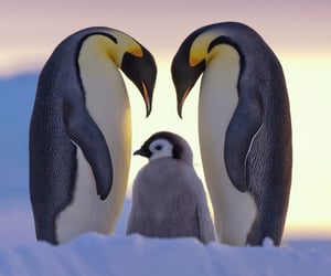 animal, penguins, and animals image