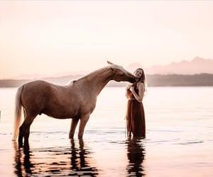 agua, Animales, and naturaleza image
