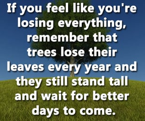 life, life lessons, and trees image