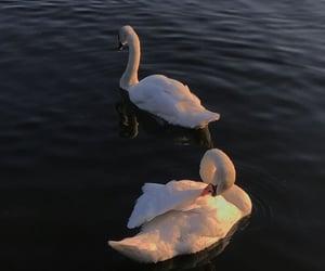 Swan, Swarovski, and white image