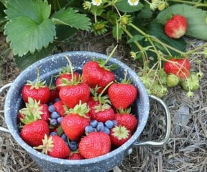 cottage, food, and fruit image