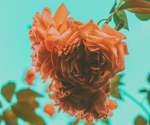 aesthetic, rosa, and rosas image