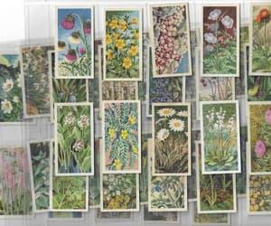 botanical, botany, and classy image
