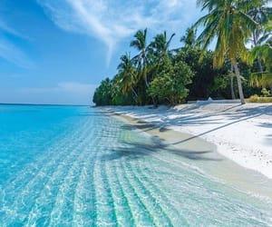 beach, sea, and travel image