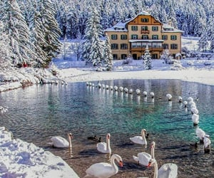 Unreal beauty 🦢❄  {cred. ig_italia on instagram}