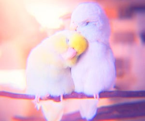 animal, bird, and cuddle image